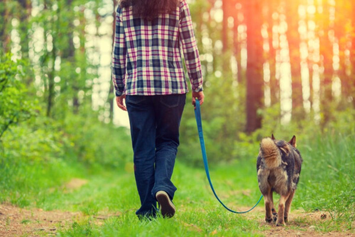 La limitación de pasear al perro en Robledo de Chavela - COVID19